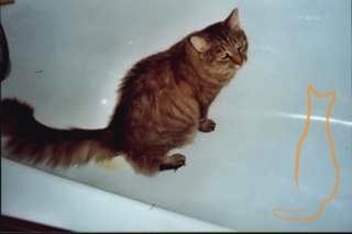 Diese Katze ist offensichtlich unzufrieden mit ihrem Katzenklo und zeigt das sehr deutlich.