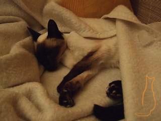 Alte Katzen brauchen einen warmen Platz!