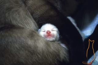 Neugeborenes Kätzchen