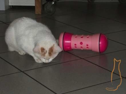 Pipolino für Katzen