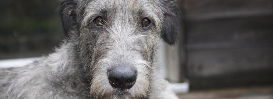 Welcher Hund passt zu mir? - Ein wichtiger Faktor ist auch die Grösse des Hundes!
