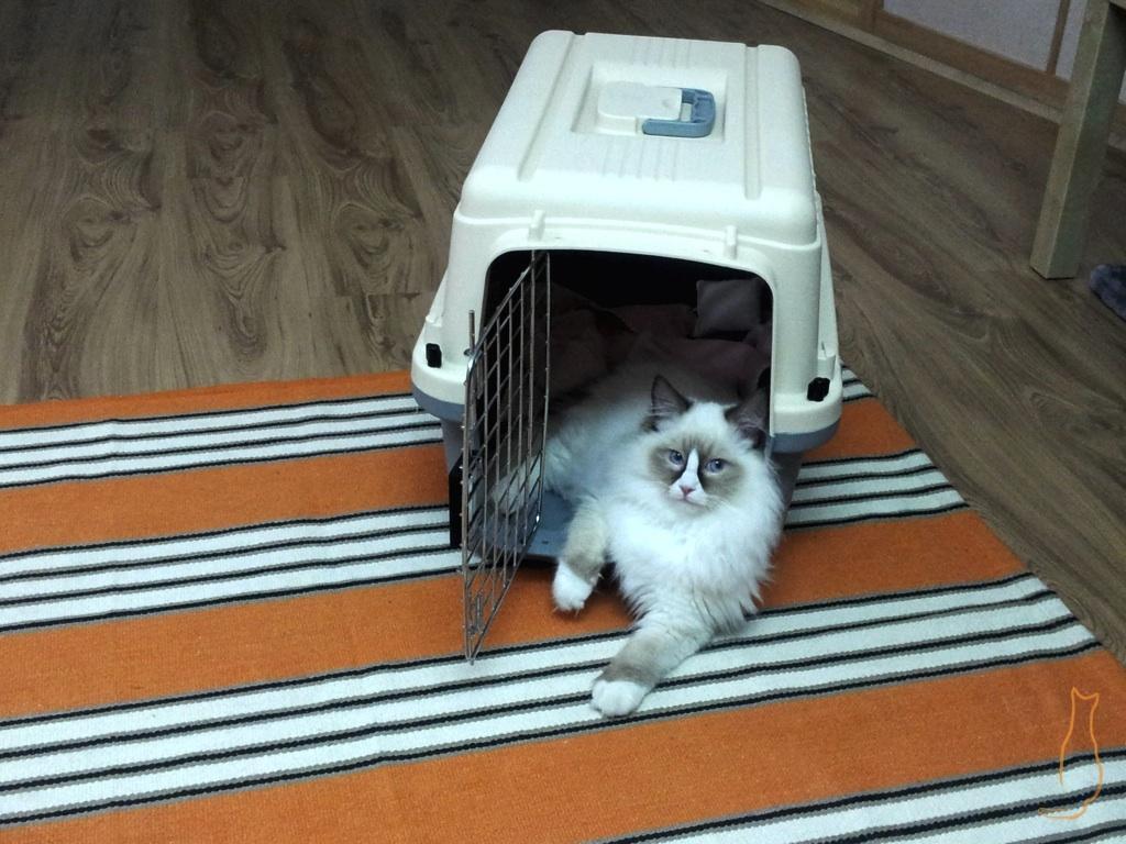 Katze lehnt entspannt aus der Box