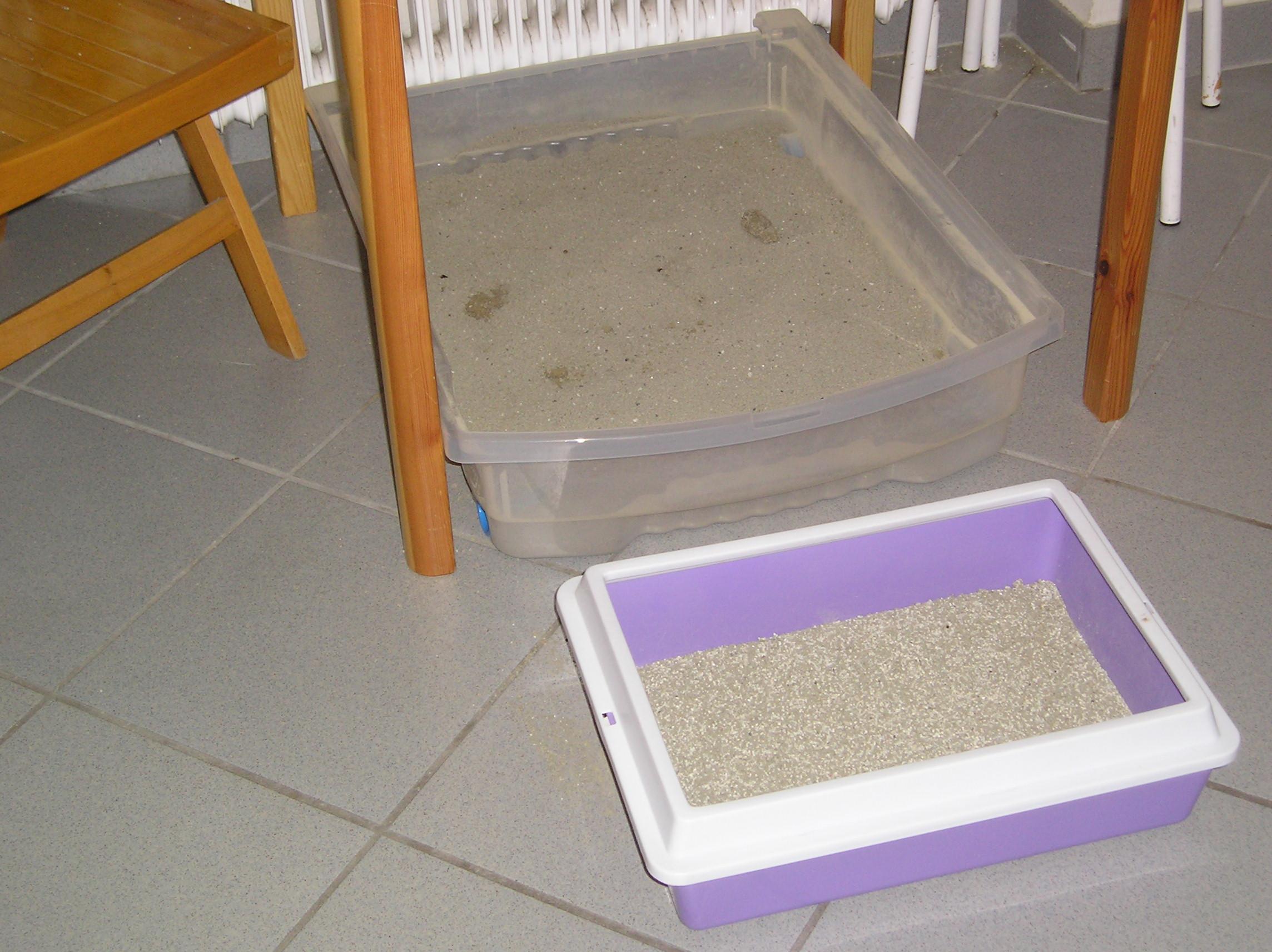 Tierärztliche Praxis für Katzenmedizin und Verhaltensmedizin