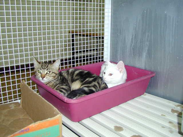 Wichtiger Punkt bei der Haltung von Katzen ist das Katzenklo. Und die richtige Verwendung …
