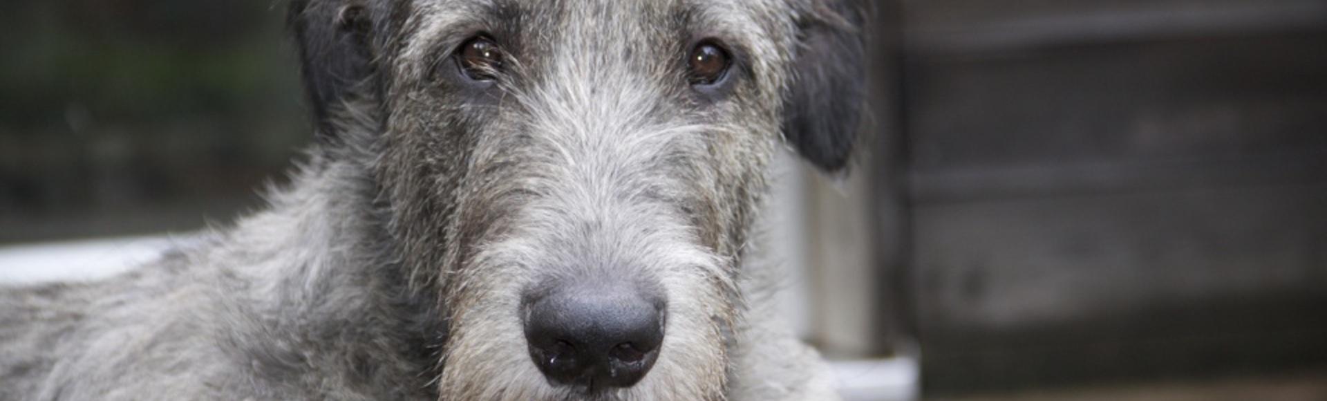 Hunde und ihre Verhaltensweisen